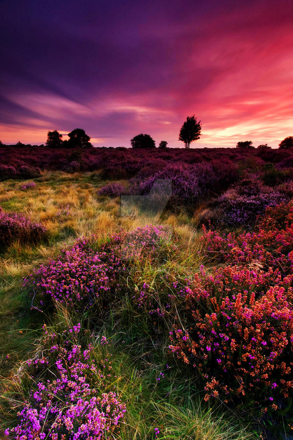 Dunwich Heath 1. by Wayne4585