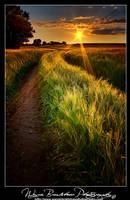Suffolk Gold 2 by Wayne4585