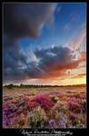 Natures Colour Fight