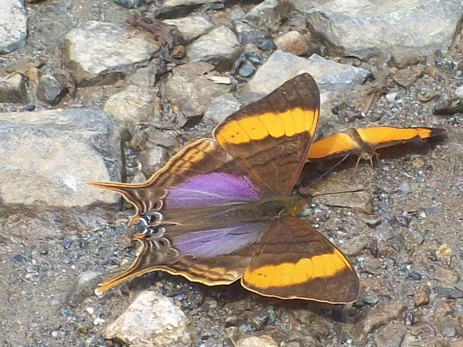 mariposas by papalotl25