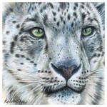 Snow White (Leopard)