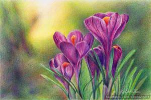 Spring Dream by kelch12
