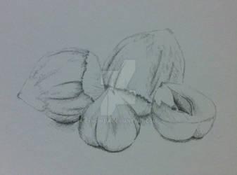 Day 2: Nut sketch