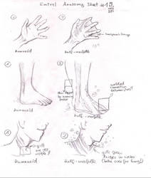 Emirel Anatomy - 1 - by AshuraG