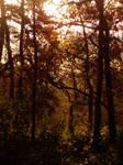 Autumn Sunset Trees 2 -untouched-