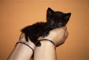 Mister Miau