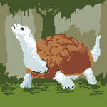29-White Tortoise