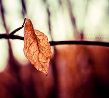Orange by Alessia-Izzo