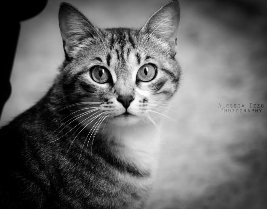 Curious cat by Alessia-Izzo