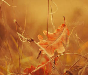 Golden Autumn by Alessia-Izzo