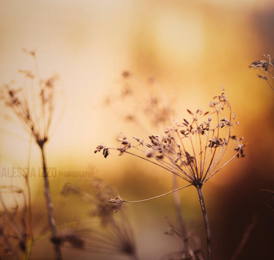 Golden beauty by Alessia-Izzo