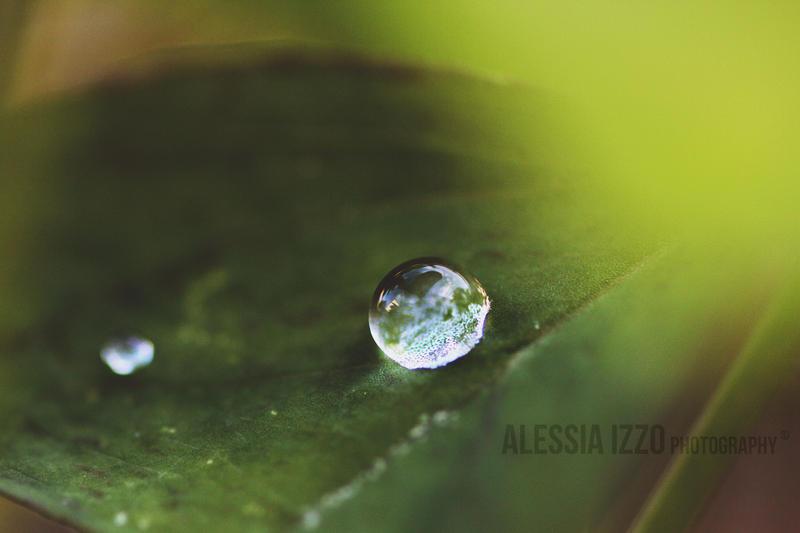 Summer Rain by Alessia-Izzo