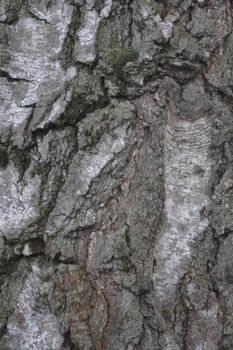 Tree Bark #1