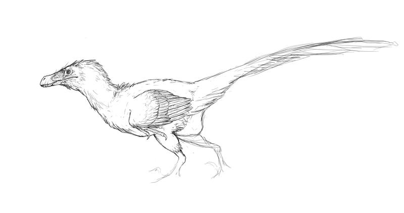 Fluffy Velociraptor Sketch by LlamaTHEDragon