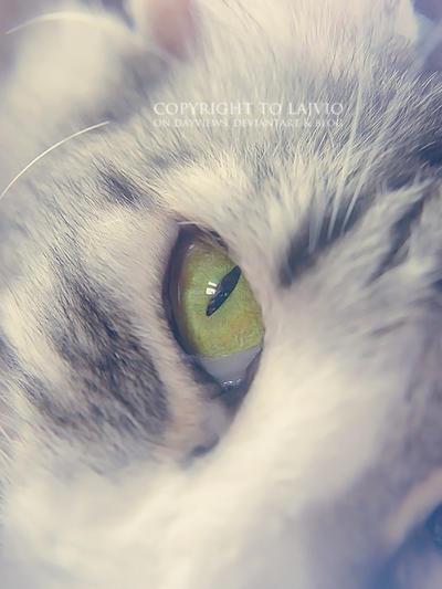 Green eye by lajvio