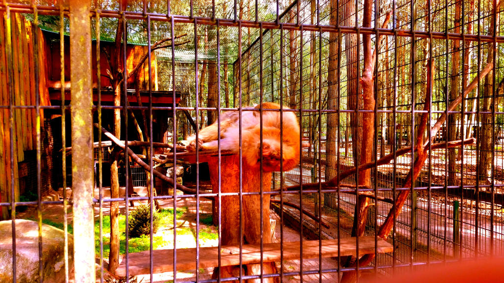 Tierpark Germendorf 28 by MiguelofKing
