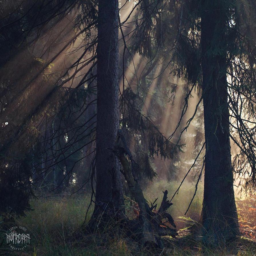 Herbstlicht by Noirerora