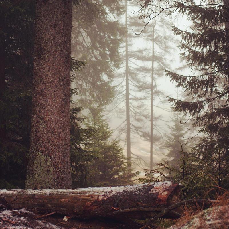 Oh, du schoener Harz by Noirerora