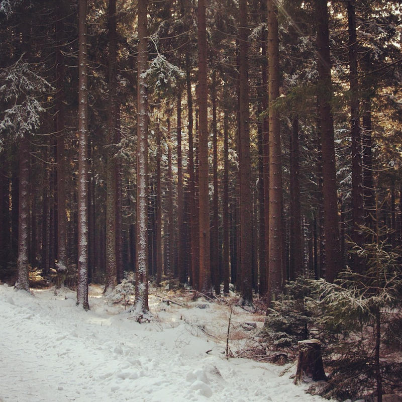 Nadelwald im Harz by Noirerora