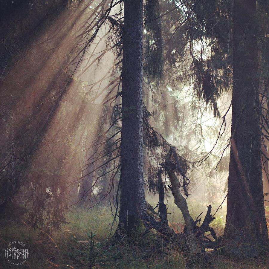 Herbstlicht im Reinhardswald by Noirerora