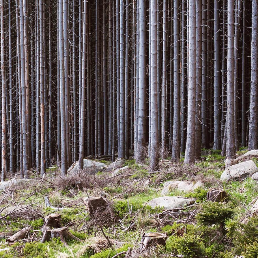 im Harz by Noirerora