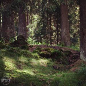 Dypt inne i skogen