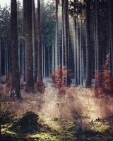 Harz by Noirerora