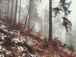 Foggy Woods