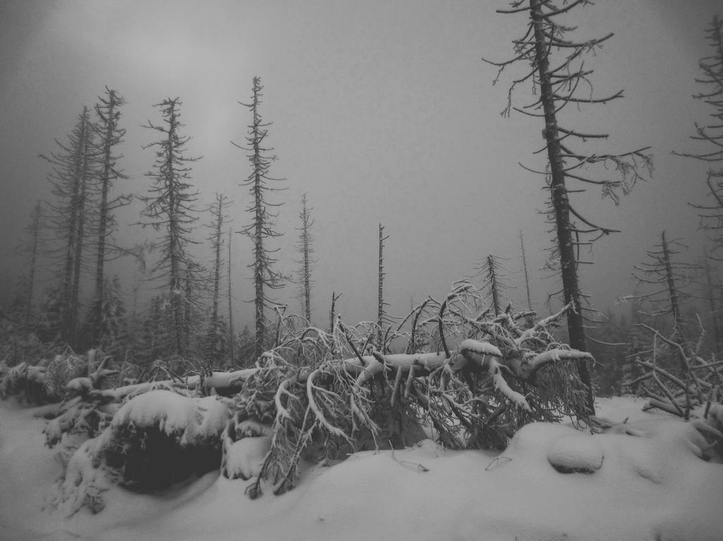 Winternacht by Noirerora