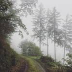 A little walk through the fog