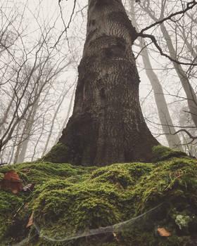Im Nebelwald