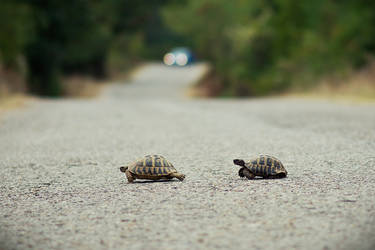 Run turtle, run for your life