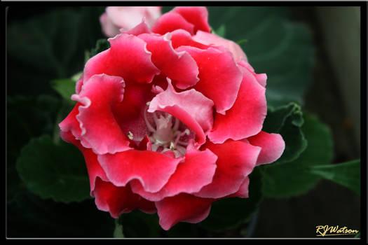 Summer Flora 5