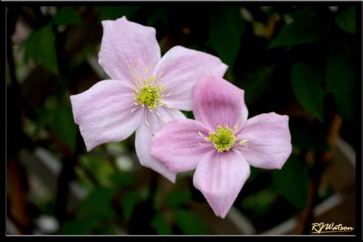 Summer Flora 8