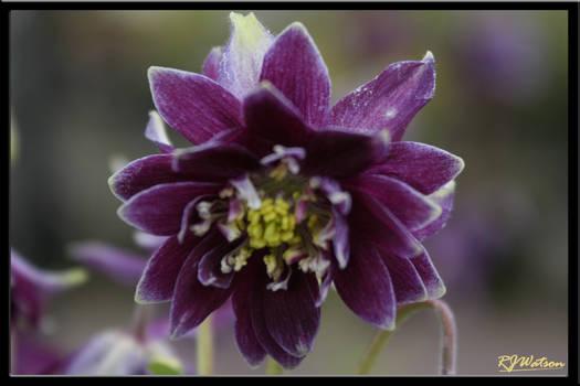Summer Flora 11
