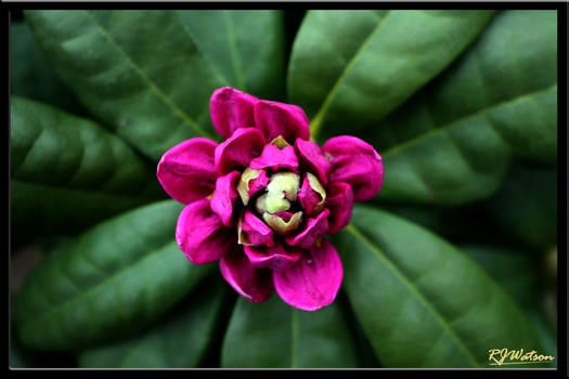 Summer Flora 12