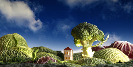 Landscape Broccoli and cabbage by oryans