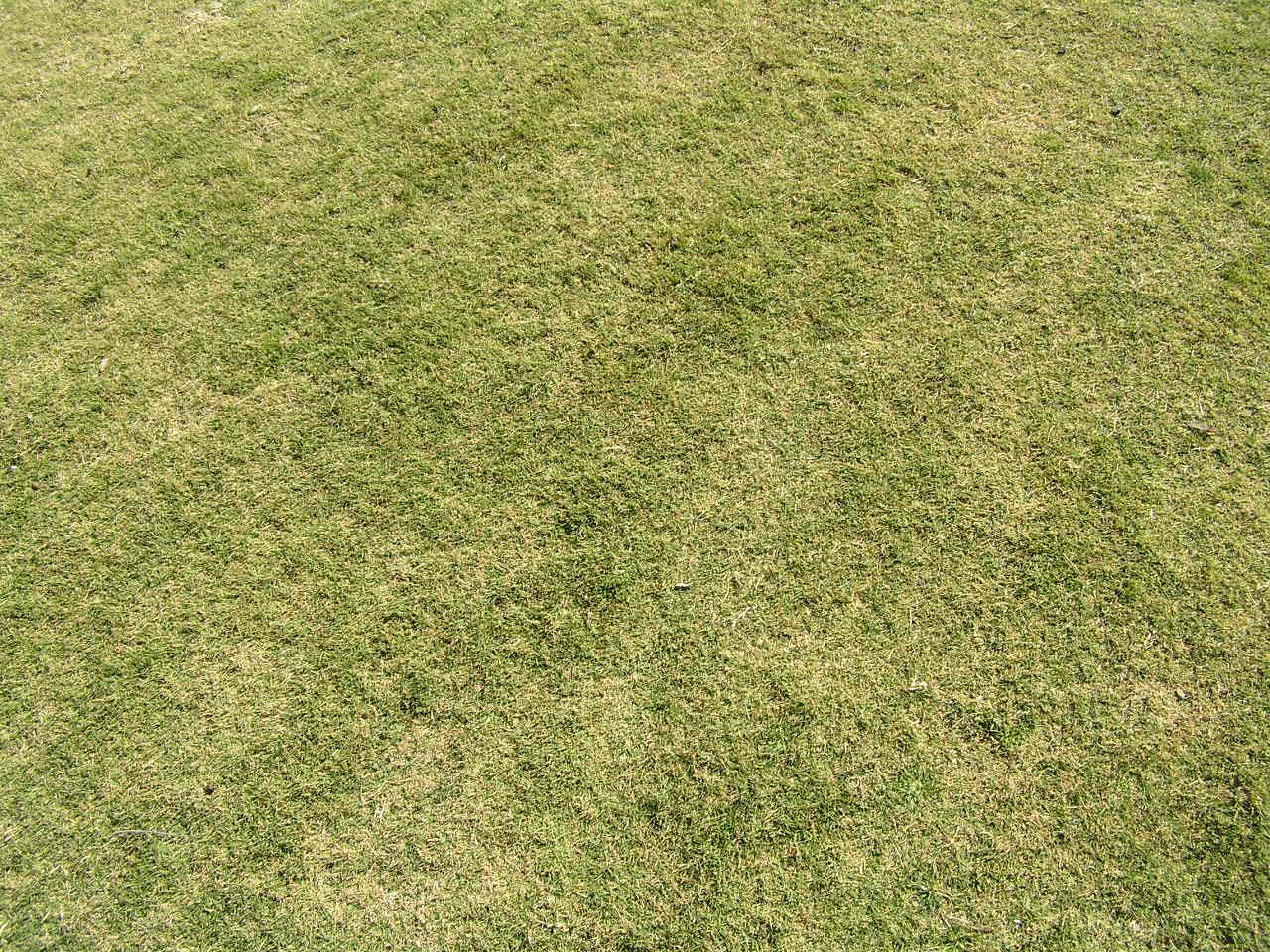 Grass is Grass