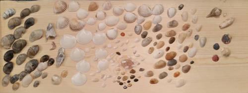 seashells on a board by medicinearrow