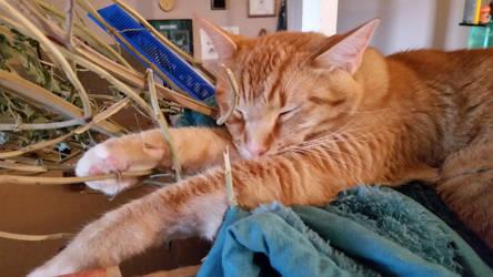 2016-06-09 Cat Nip Dreams by medicinearrow