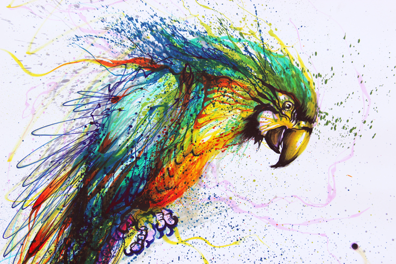 The Color Parrot by huatunan on DeviantArt