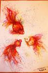 The goldfish petti