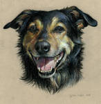 My Dog - Kormos by ZsofiaGyuker