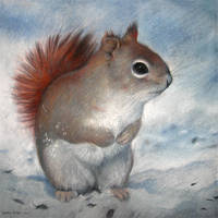 Winter Squirrel by ZsofiaGyuker
