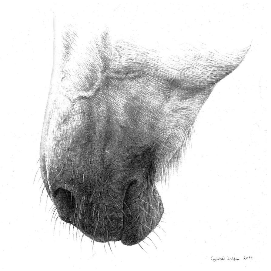 Nosey by ZsofiaGyuker