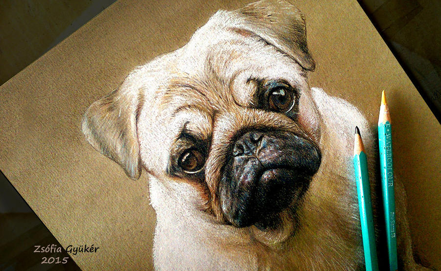 Brandy pug commission detail by ZsofiaGyuker