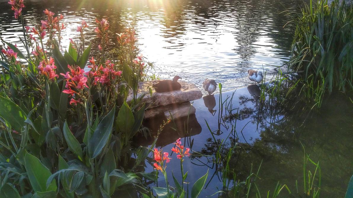 Ducks by Hotora13