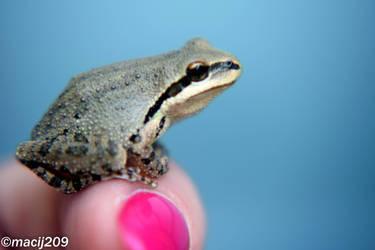 Mr. Frog by macij209