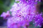 Wildflowers by macij209
