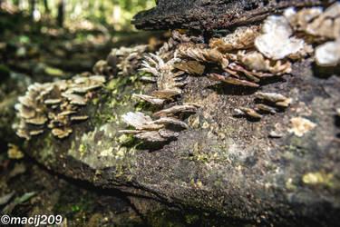 Mushrooms by macij209